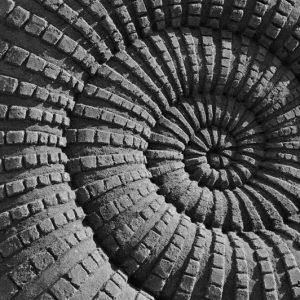 Sandsnegl i sort og hvid fotografi - billeder4you