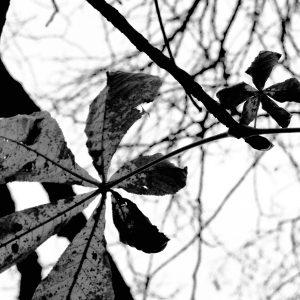 Blade fra bunden - billeder4you