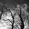 Look mod himlen - Abstrakt kig mod himlen i sort hvid