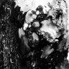 Træstub - træ med knude i sort/hvid