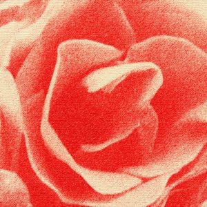 Abstrakt rose i rød - abstrakt blomst rød