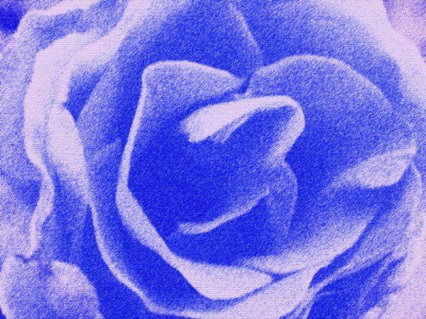 Abstrakt rose i blå - abstrakt blomst i blå