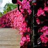 Pink bridge- Foto af pink brigde taget af billeder4you