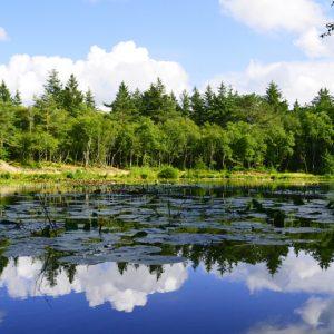 Billede af tversted søerne taget af billeder4you