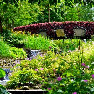 Grøn oase med lidt pink- foto af pink bridge taget af billeder4you