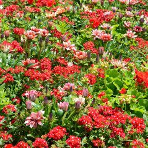 Blomster eng - foto af blomstereng taget af billeder4you