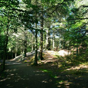 Skoven - En solskinsdag ved Tverstedsøerne taget af billeder4you