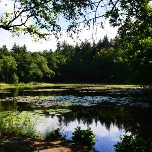 Tværsted sø - billeder4you