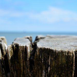 Strandtræ - closeup af pæl i bro ved stranden