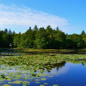 Foto af dejlig sommerdag ved Tversted Søerne