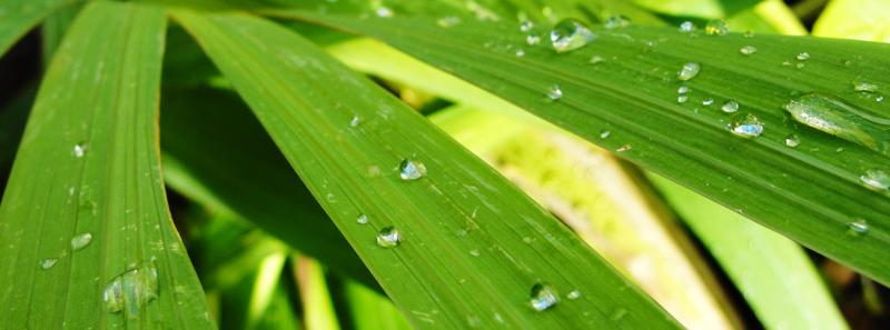 Panorama raindrop leaf - foto af blade efter en regn
