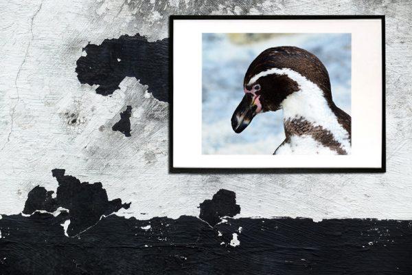 abstrakt foto af pingvin taget af billeder4you