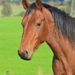 Heste fotografering hos billeder4you Hoved - Få din hest fotograferet til en god pris