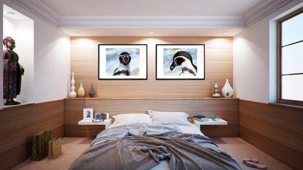 Billedsæt af pingviner - billeder4you