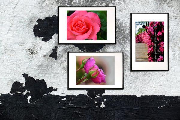 3 pink flowers - blomster billeder - billeder4you