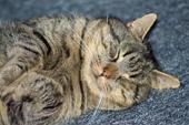 Fotografering af katte