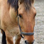 Heste fotografering hos billeder4you - semi close - Få din hest fotograferet til en god pris