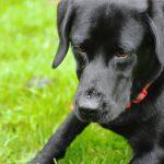 Hunde fotografering hos billeder4you aktion billede - Få din hund fotograferet i dit eget hjem