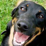Hunde fotografering hos billeder4you close up - Få din hund fotograferet i dit eget hjem