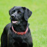 Hunde fotografering hos billeder4you - Få din hund fotograferet i dit eget hjem
