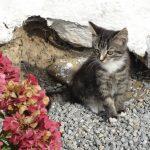 katte fotografering billeder4you - Få din kat fotograferet i dit eget hjem