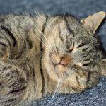 katte fotografering billeder4you close up - Få din kat fotograferet i dit eget hjem