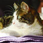 katte fotografering billeder4you indenfor